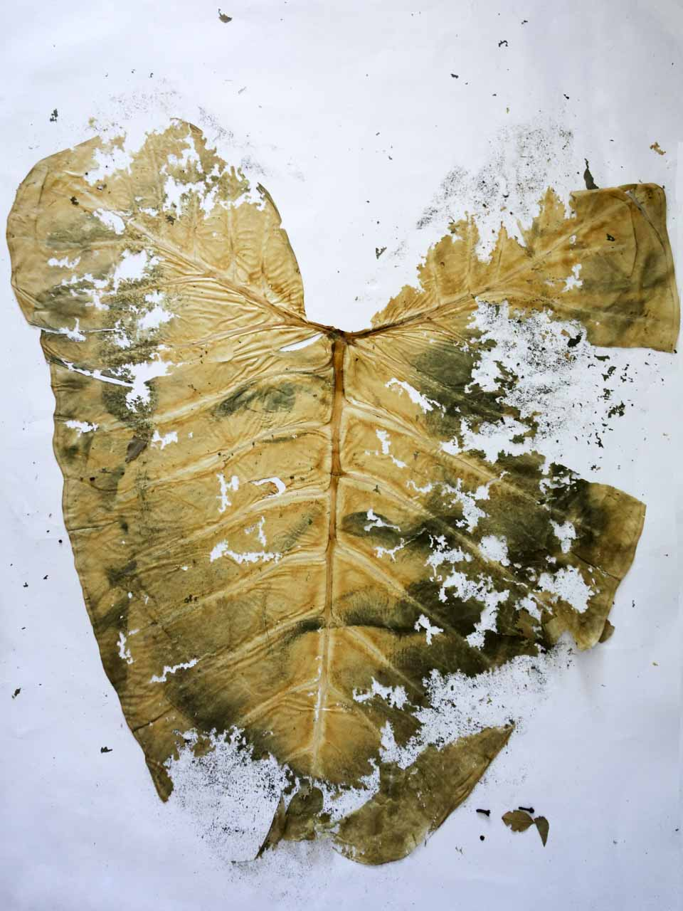 decompose leaf art work